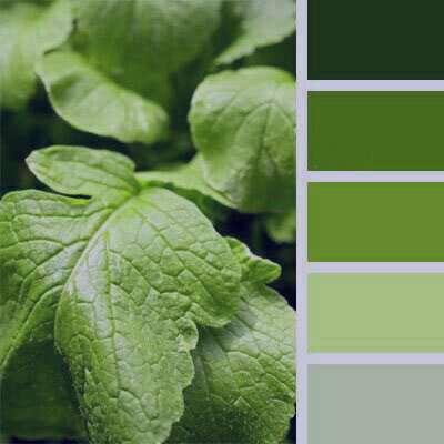 گلچین زیباترین شعر در مورد رنگ سبز