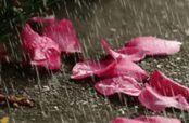 گلچین زیباترین شعر در مورد صدای باران