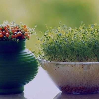 شعر در مورد سبزه