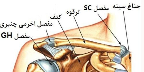 درد استخوان ترقوه , درد استخوان ترقوه سمت راست , درد استخوان ترقوه سمت چپ , درد استخوان ترقوه نشانه چیست