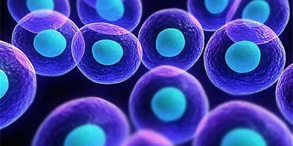 سلول های بنیادی , سلول های بنیادی چیست , سلول های بنیادی مزانشیمی , سلول های بنیادی بند ناف