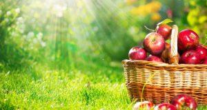 درمان و رژیم غذایی برای چاقی سیبی شکل در طب سنتی