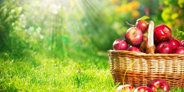 چاقی سیبی شکل , چاقی سیبی شکل در طب سنتی , چاقی سیبی شکل و گلابی شکل , درمان چاقی سیبی شکل