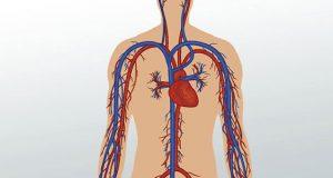 شاخه های شریان افتالمیک یا سرخرگ کاروتید درونی چیست