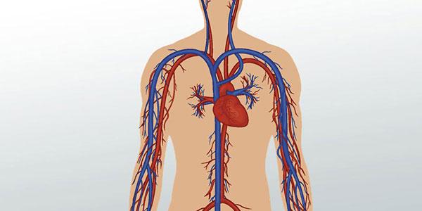 شریان افتالمیک , سرخرگ کاروتید درونی , سرخرگ چشمی , سرخرگ سبات داخلی