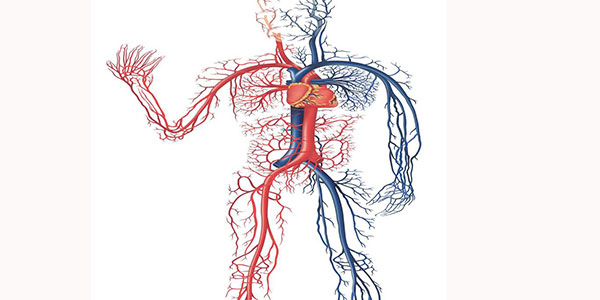 شریان فمورال , شریان فمورال کجاست , شریان فمورال مشترک , شریان فمورال سطحی