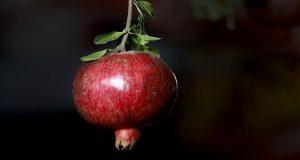 انار؛ میوه بهشتی در فرهنگ، هنر و آیین ایرانی