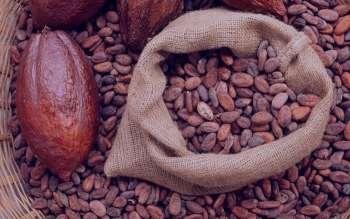 خواص کاکائو و اسهال برای درمان این بیماری عفونی