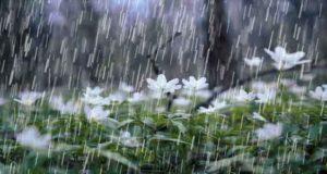 مجموعه 73 دلنوشته و متن زیبا و ادبی در مورد باران بهاری