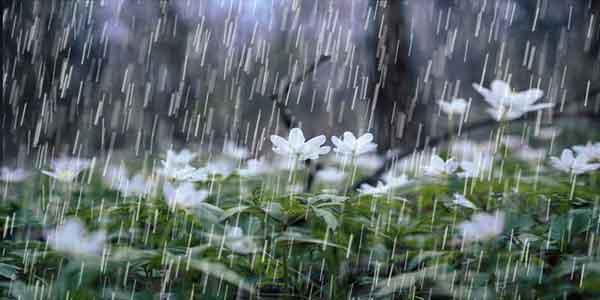 متن در مورد باران و گل ، متن در مورد باران پشت پنجره ، متن در مورد باران و عاشقی ، متن در مورد باران غمگین