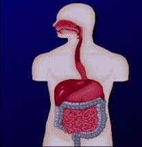 درمان یبوست با تغذیه مناسب