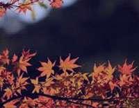 از بیماری های پاییزی جلوگیری کنید