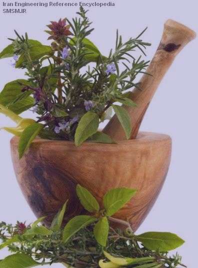 درمان شوره سر با روش های گیاهی
