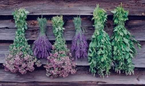 درمان سرفه با گیاهان دارویی