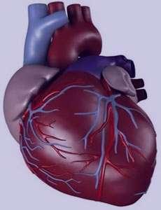 گیاه درمانی در بیماری های قلبی - عروقی