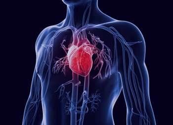 عادت های نادرستی که سلامت قلب را به خطر می اندازد