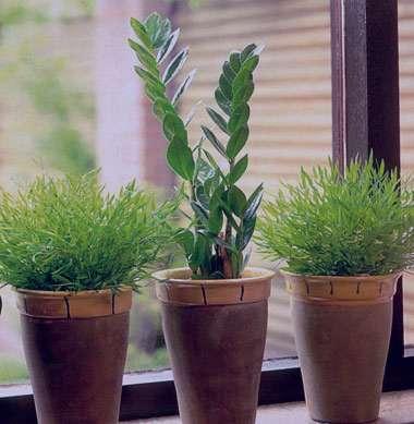 تصفیه هوای خانه به روش گیاهی