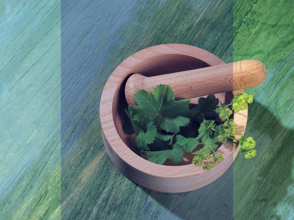 درمان بیماری هاى طحال با گیاهان دارویی