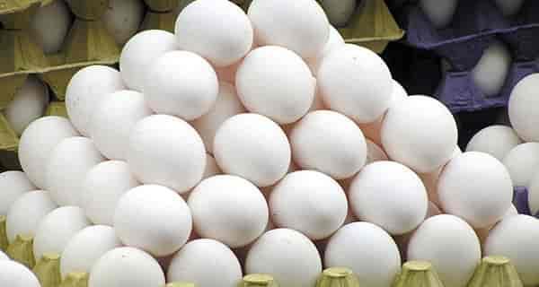 تعبیر خواب تخمه مرغ شکستن ، تعبیر خواب تخمه مرغ اب پز ، تعبیر خواب تخمه مرغ سفید ، تعبیر خواب تخمه مرغ گندیده