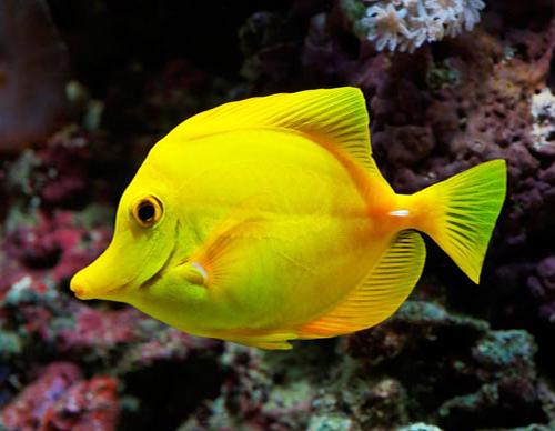تعبیر خواب ماهی