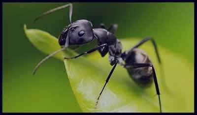 تعبیر خواب مورچه