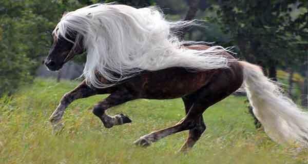 تعبیر خواب اسب سرخ , تعبیر خواب دیدن اسب سرخ , تعبیر خواب خریدن اسب سرخ رنگ