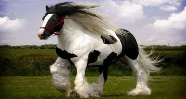 تعبیر خواب اسب دیدن , تعبیر خواب دیدن اسب قرمز , تعبیر خواب دیدن اسب سواری , تعبیر خواب دیدن اسب در خانه