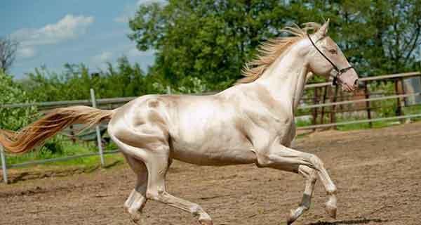 تعبیر خواب سوار بر اسب سرخ , تعبیر اسب سرخ در خواب , تعبیر دیدن اسب سرخ در خواب