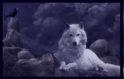تعبیر خواب گرگ