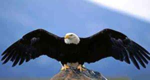 تعبیر خواب عقاب | 51 تعبیر دیدن عقاب در خواب