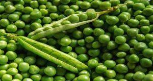 خواص و طبع نخود فرنگی چیست سرد است یا گرم در طب سنتی