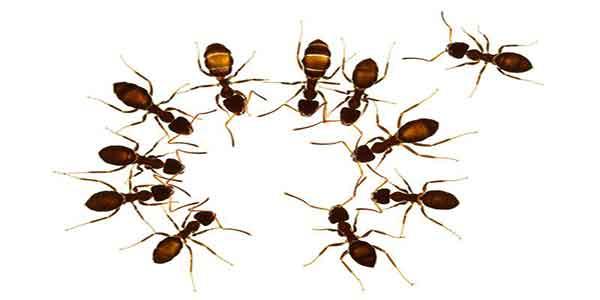 تعبیر خواب مورچه از دید حضرت یوسف