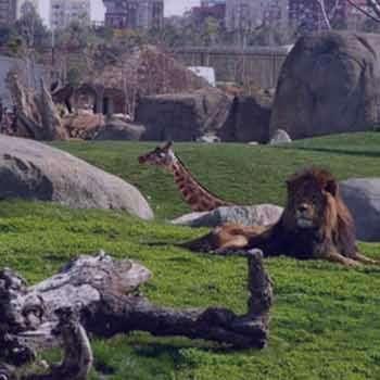 تعبیر خواب باغ وحش
