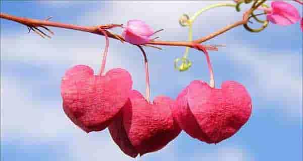 شعر در مورد عشق واقعی ، شعر عاشقانته برای عشقم ،شعر عاشقانه نو
