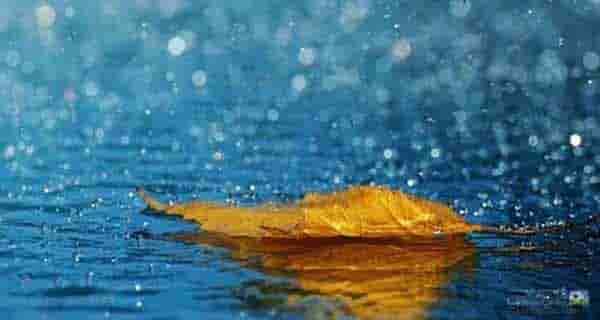 شعر در مورد باران ، شعر باران ، شعر در مورد باران پاییزی ، شعر در مورد باران بهاری