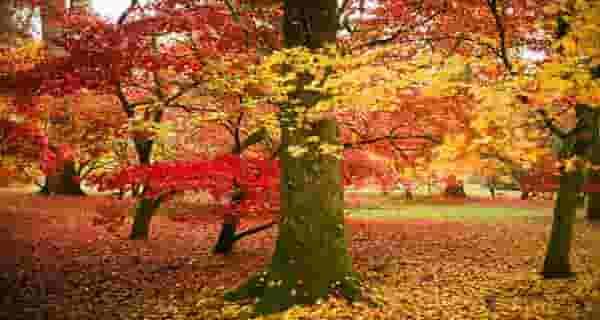 شعر در مورد پاییز ، شعر پاییز ، شعر در مورد پاییز و بهار ، شعر در مورد پاییز کودکانه