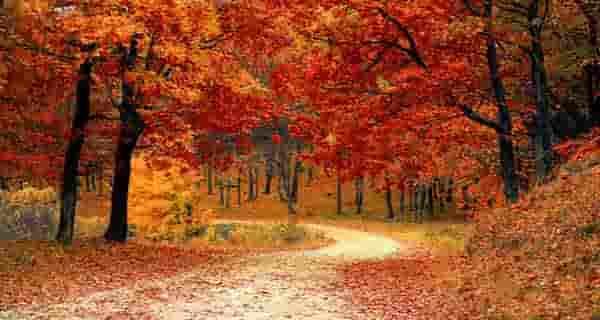 auv nv l,vn \hddc ، شعر در مورد پاییز سهراب سپهری ، شعر در مورد پاییز و عشق