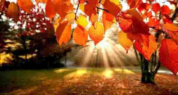 شعر در مورد پاییز از حافظ ، شعر در مورد پاییز از فریدون مشیری ، شعر در مورد پاییز و باران