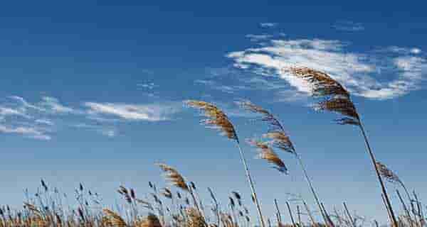 شعر در مورد باد