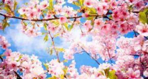 شعر بهار | 95 شعر زیبا در مورد بهار و باران بهاری