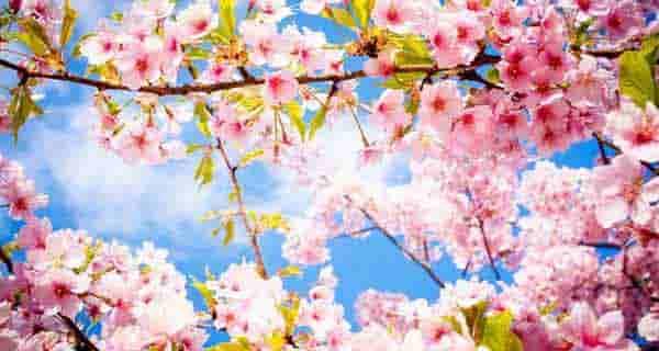 شعر در مورد بهار ، شعر بهار ، auv nv l,vn fihv ، auv fihv