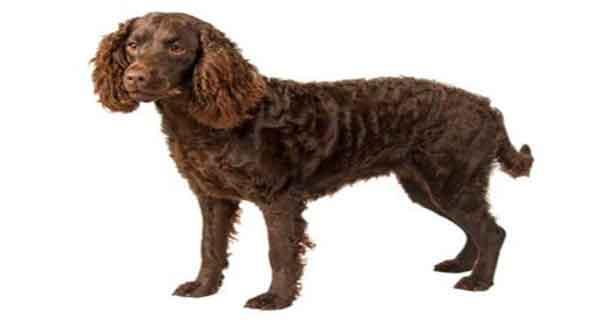 متن در مورد سگ ، جملات معروف در مورد سگ ، جملات زیبا در مورد سگ ، حدیث در مورد سگ