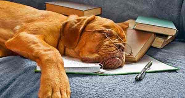 شعر در مورد سگ ، شعر سگ ، شعر برای سگ ها ، auv nv l,vn s'
