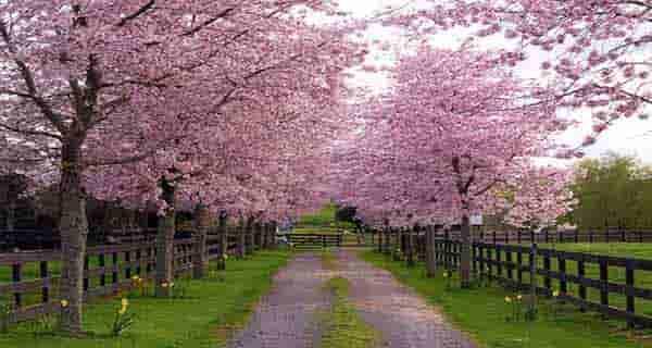 شعر در مورد بهار برای کودکان ، شعر در مورد بهار از سعدی ، شعر در مورد بهار از پروین اعتصامی ، شعر در مورد بهار از قیصر امین پور