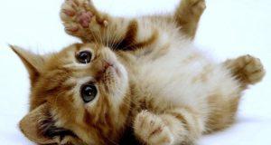 شعر در مورد گربه ؛ 78 شعر در مورد گربه ملوس