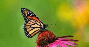 شعر در مورد پروانه ؛ 74 شعر کوتاه در مورد پروانه شدن
