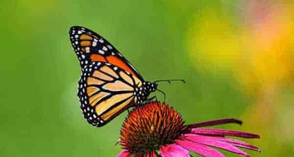شعر در مورد پروانه