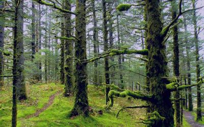 شعر در مورد جنگل
