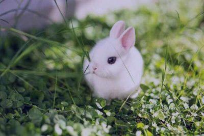 شعر در مورد خرگوش