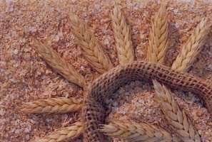 ارزش غذایی و خواص گندم در طب سنتی از نظر امامان و بزرگان